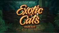 Exotic Cats slots Info
